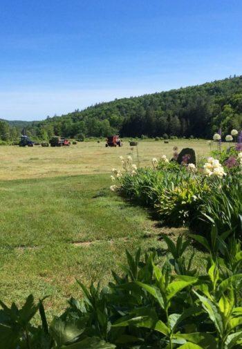 field being hayed, round bales