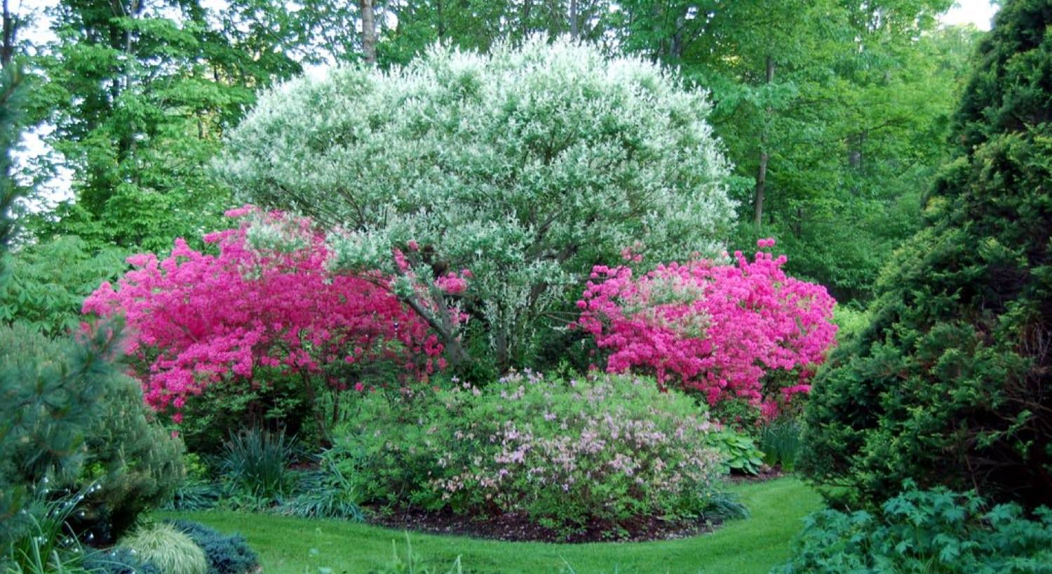 Gorgeous lush green trees, flowering white tree and two vibrant pink flowering trees