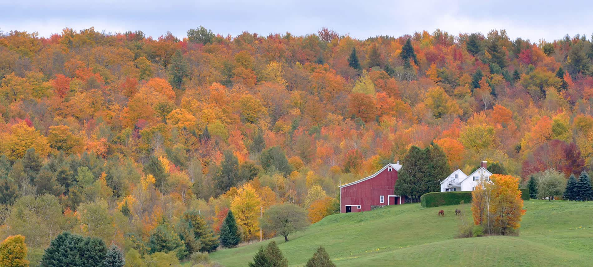 Stunning view of green grassy lawn, evergreens, red barn, and hundreds of trees with fall foliage in the background